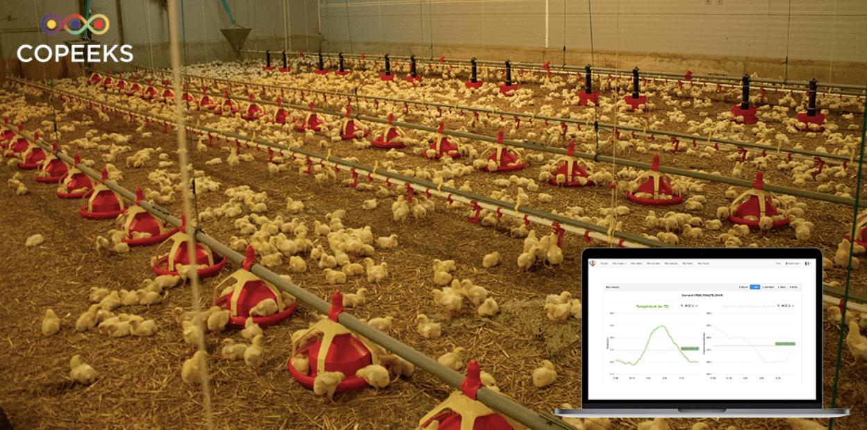 L'été 2020 s'annonce chaud. Comment limiter le stress thermique de vos animaux d'élevage ?